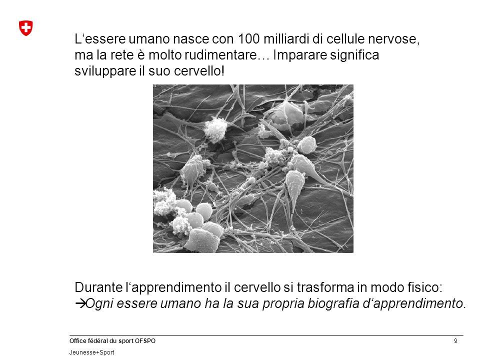 L'essere umano nasce con 100 milliardi di cellule nervose, ma la rete è molto rudimentare… Imparare significa sviluppare il suo cervello!