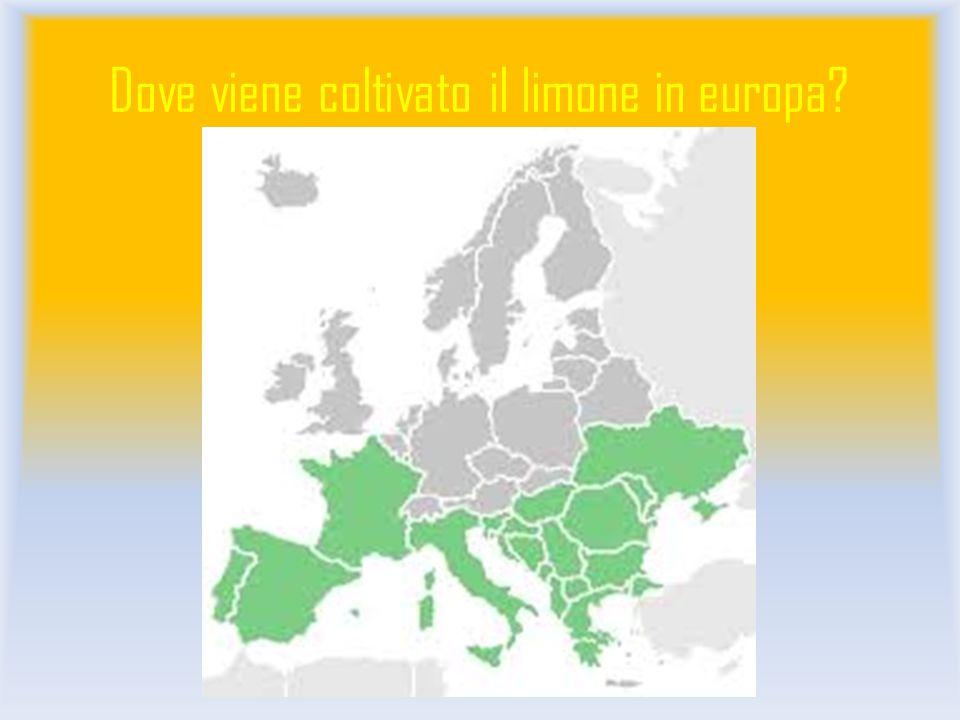 Dove viene coltivato il limone in europa