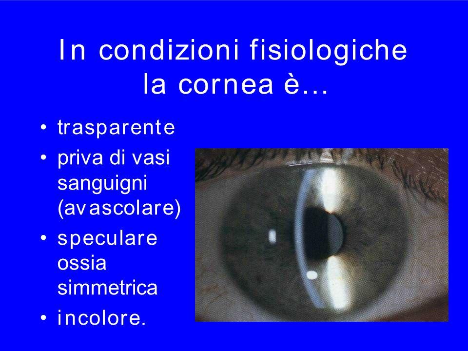 I n condizioni fisiologiche la cornea è…