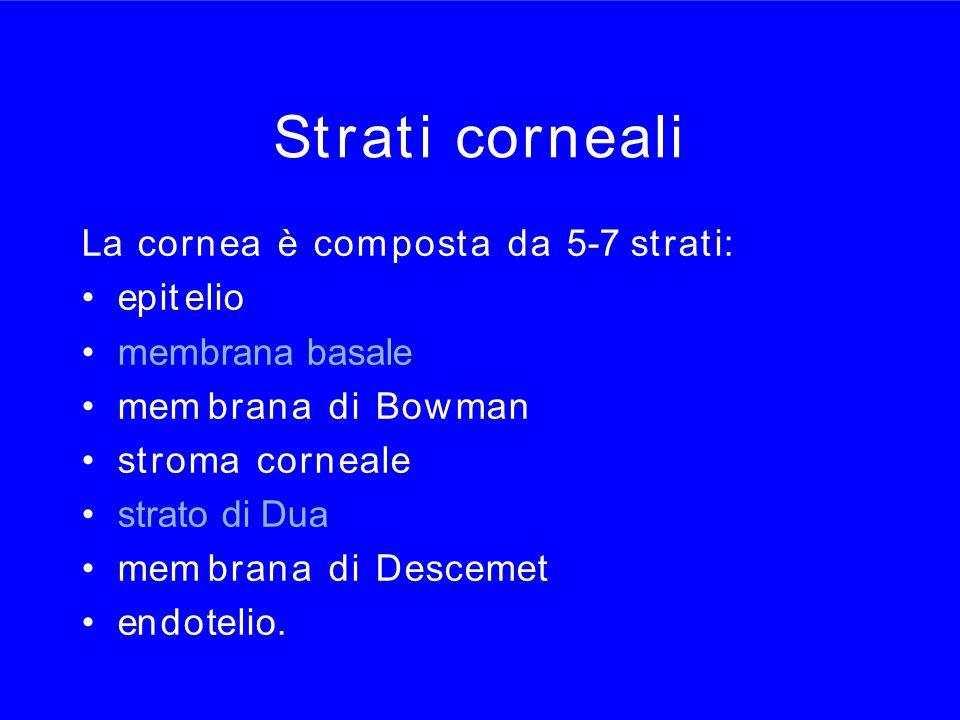 Strati corneali La cornea è com posta da 5-7 strati: epit elio