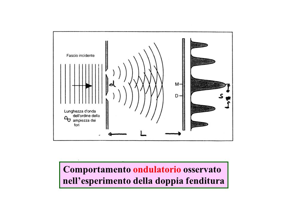 Comportamento ondulatorio osservato