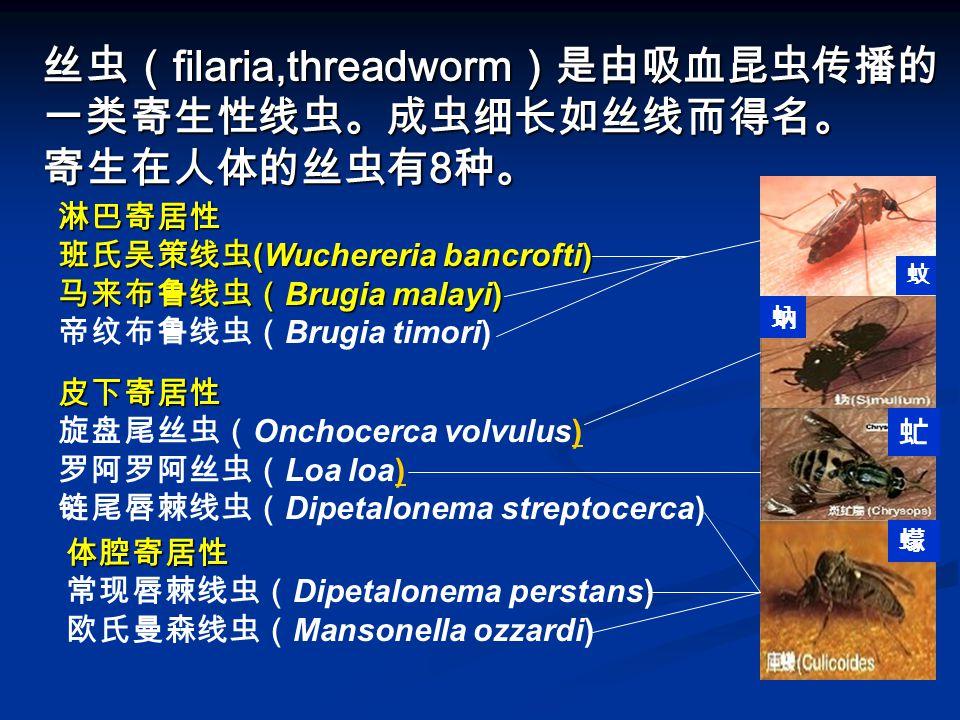 丝虫(filaria,threadworm)是由吸血昆虫传播的一类寄生性线虫。成虫细长如丝线而得名。 寄生在人体的丝虫有8种。