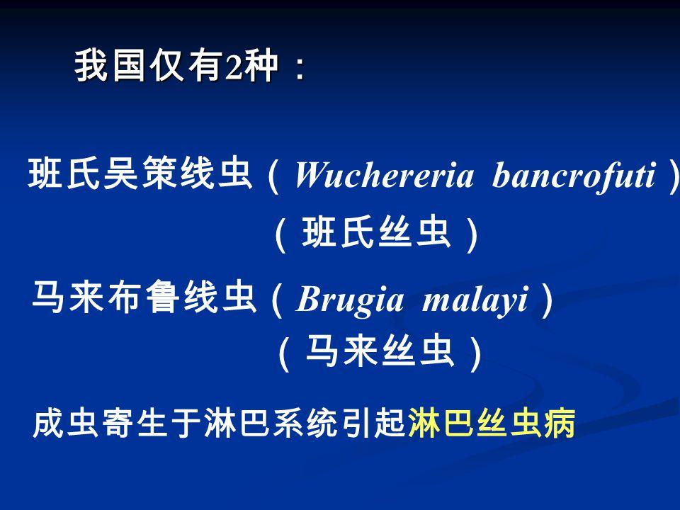 班氏吴策线虫(Wuchereria bancrofuti) (班氏丝虫)