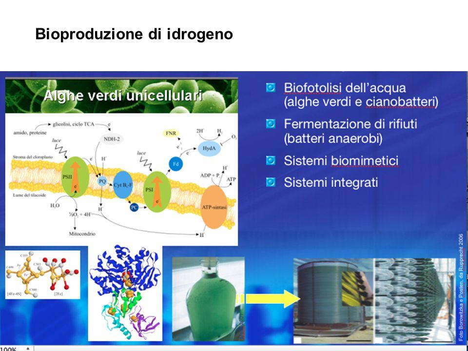 Bioproduzione di idrogeno