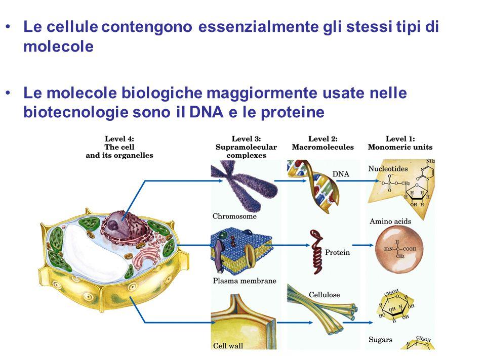 Le cellule contengono essenzialmente gli stessi tipi di molecole