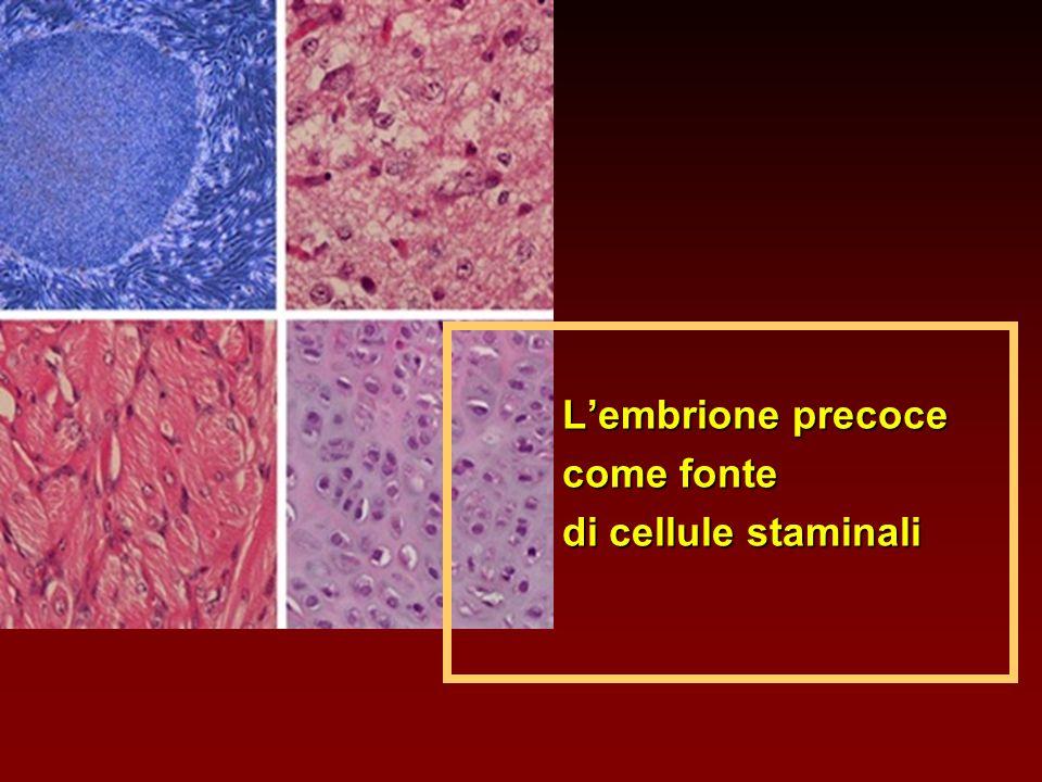 L'embrione precoce come fonte di cellule staminali