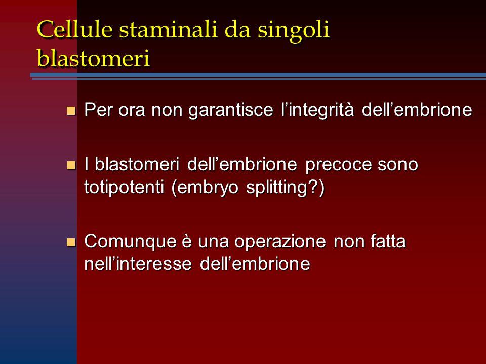 Cellule staminali da singoli blastomeri