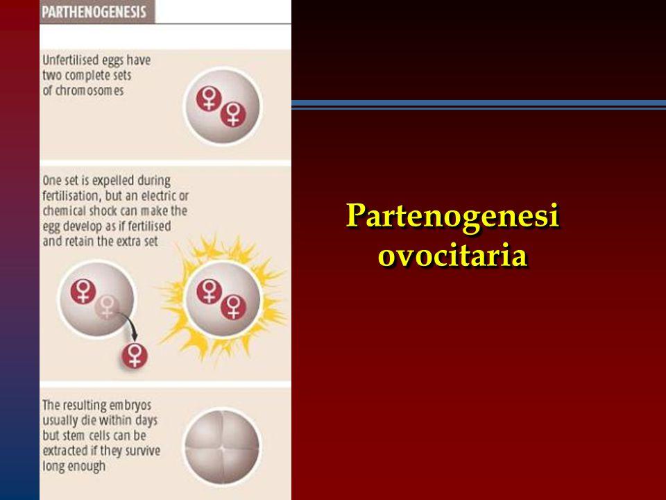 Partenogenesi ovocitaria