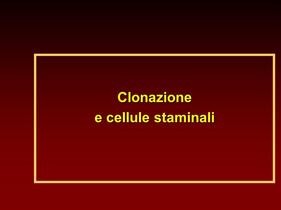 Clonazione e cellule staminali