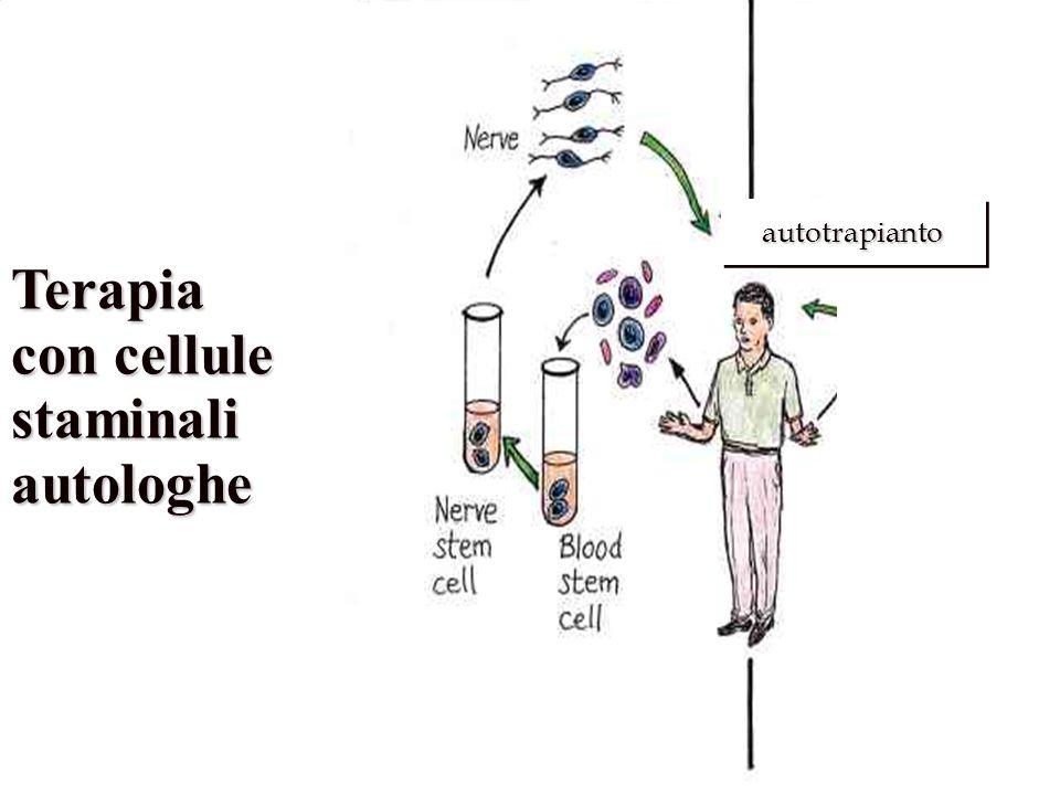 Terapia con cellule staminali autologhe . autotrapianto