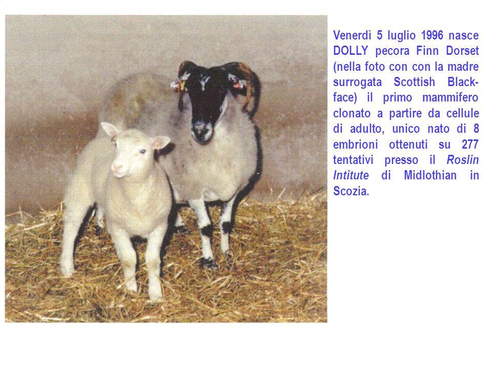 Venerdì 5 luglio 1996 nasce DOLLY pecora Finn Dorset (nella foto con con la madre surrogata Scottish Black-face) il primo mammifero clonato a partire da cellule di adulto, unico nato di 8 embrioni ottenuti su 277 tentativi presso il Roslin Intitute di Midlothian in Scozia.