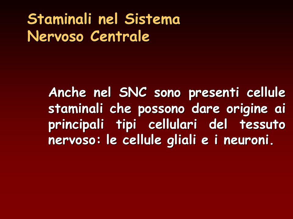 Staminali nel Sistema Nervoso Centrale