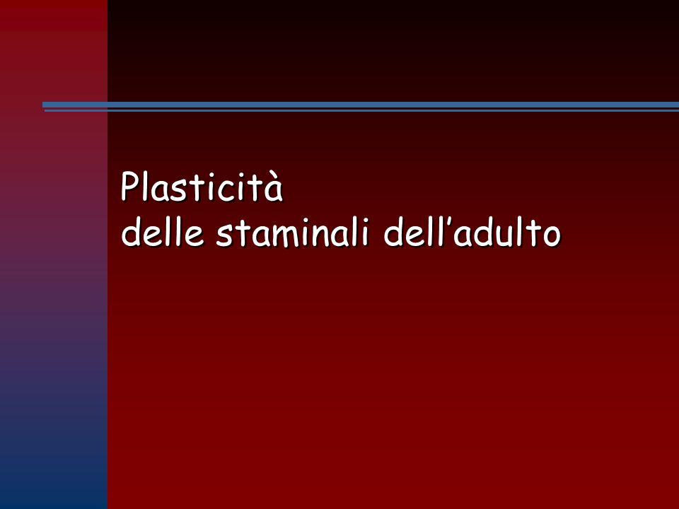 Plasticità delle staminali dell'adulto