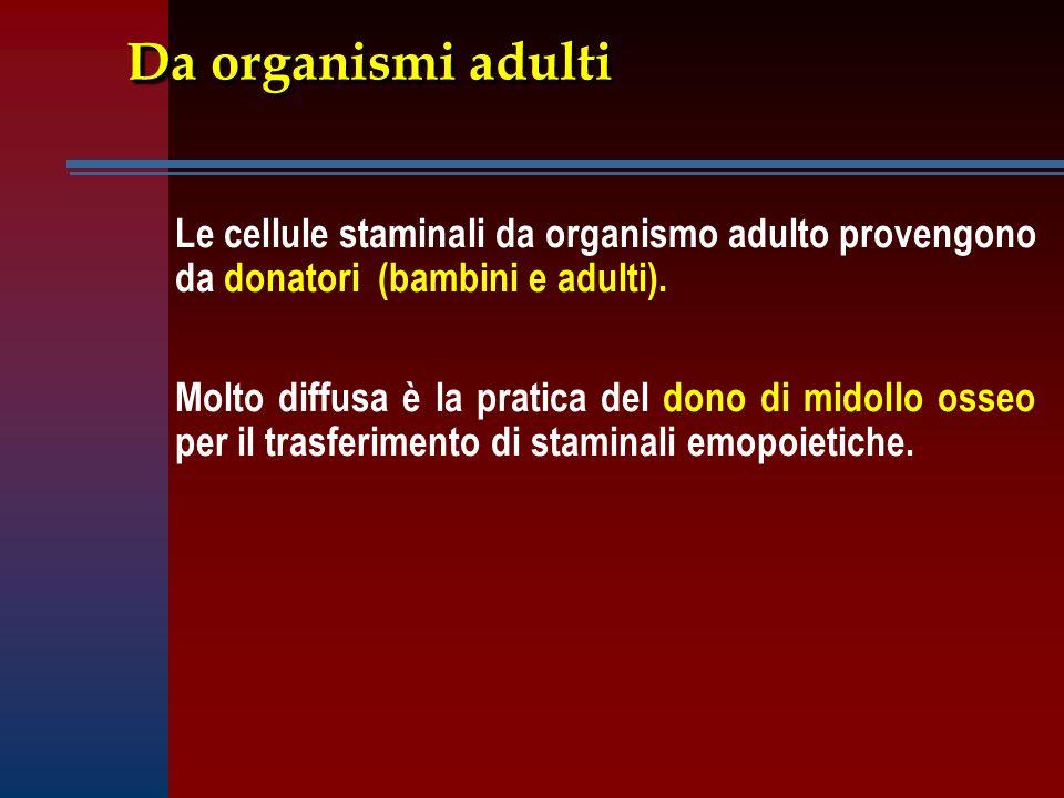 Da organismi adulti Le cellule staminali da organismo adulto provengono da donatori (bambini e adulti).