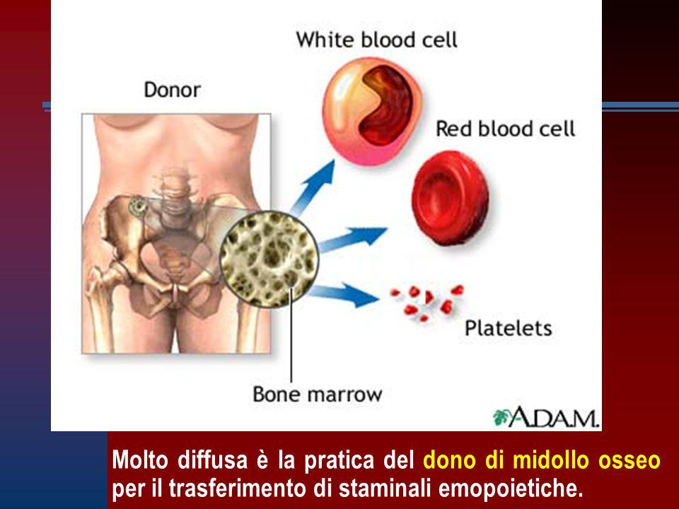 Molto diffusa è la pratica del dono di midollo osseo per il trasferimento di staminali emopoietiche.