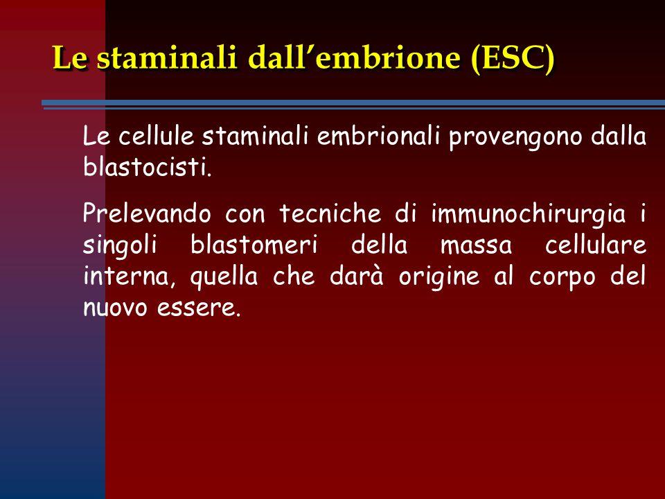 Le staminali dall'embrione (ESC)