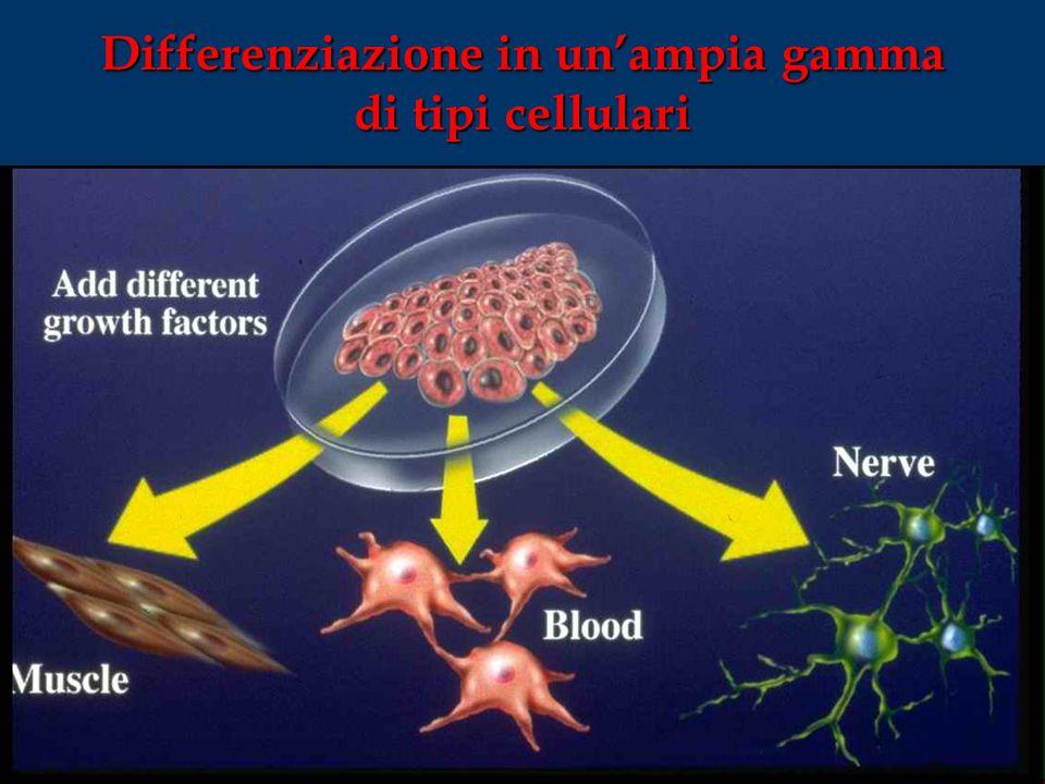 Differenziazione in un'ampia gamma di tipi cellulari