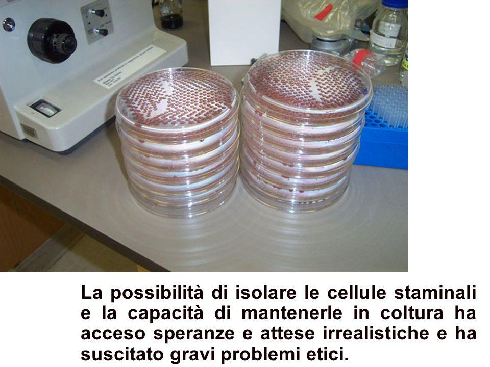 Colture di cellule staminali