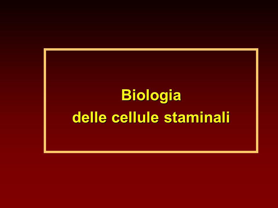 delle cellule staminali