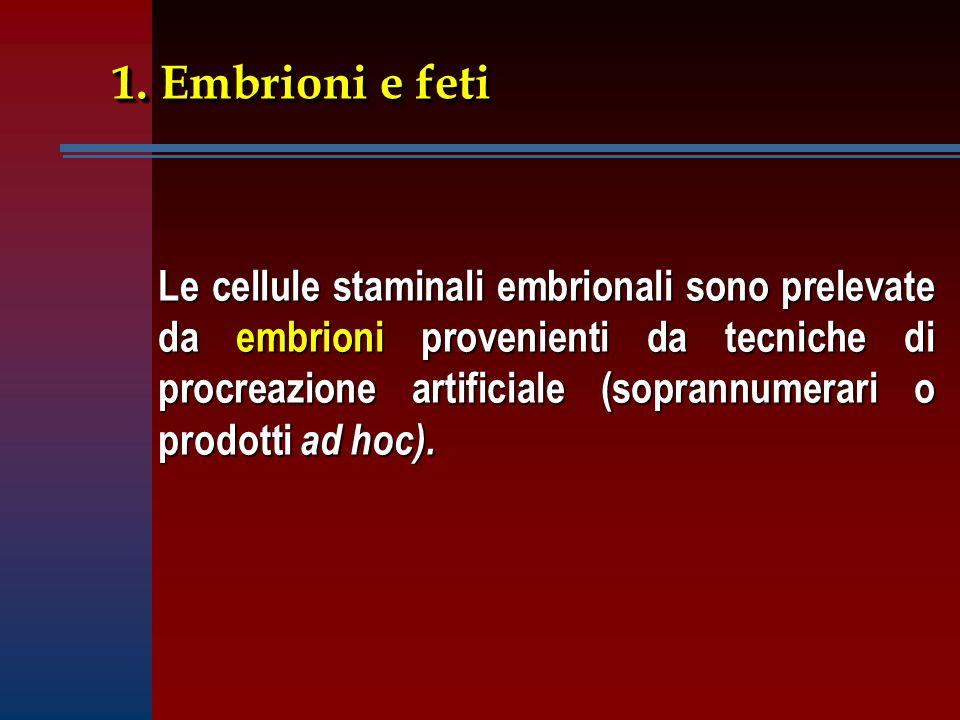 1. Embrioni e feti