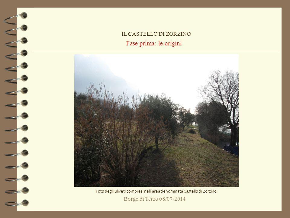 Foto degli uliveti compresi nell'area denominata Castello di Zorzino