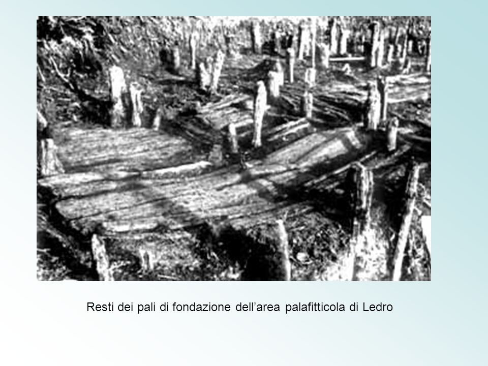 Resti dei pali di fondazione dell'area palafitticola di Ledro