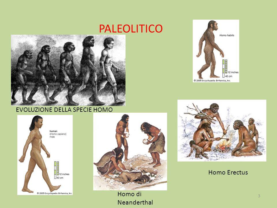 PALEOLITICO EVOLUZIONE DELLA SPECIE HOMO Homo Erectus