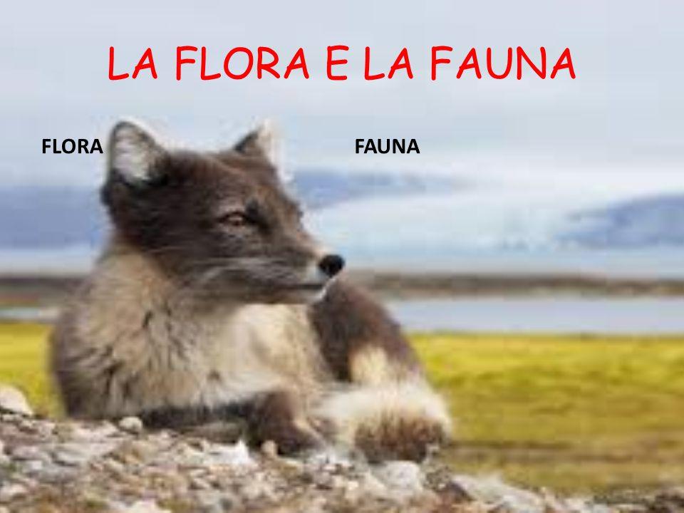 LA FLORA E LA FAUNA FLORA FAUNA