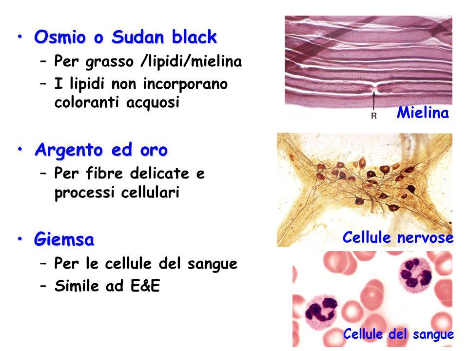 Osmio o Sudan black Argento ed oro Giemsa Per grasso /lipidi/mielina