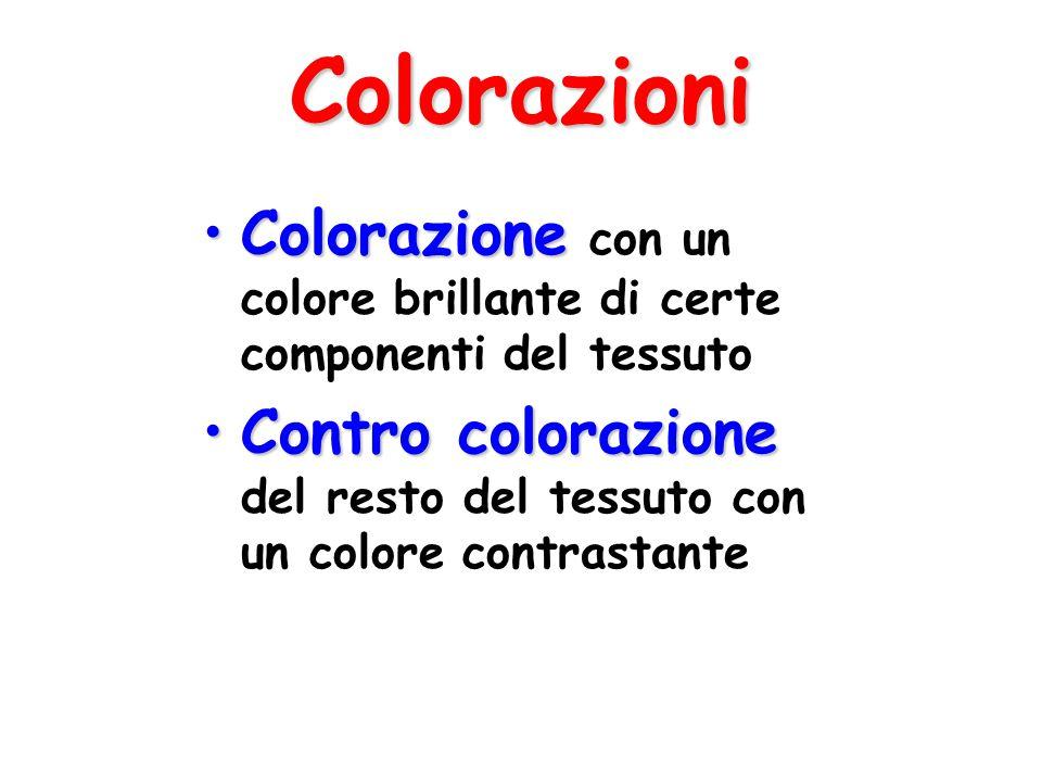 Colorazioni Colorazione con un colore brillante di certe componenti del tessuto.