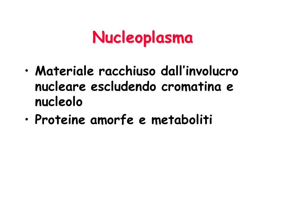 Nucleoplasma Materiale racchiuso dall'involucro nucleare escludendo cromatina e nucleolo.