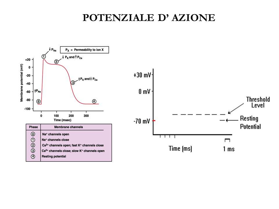 POTENZIALE D' AZIONE