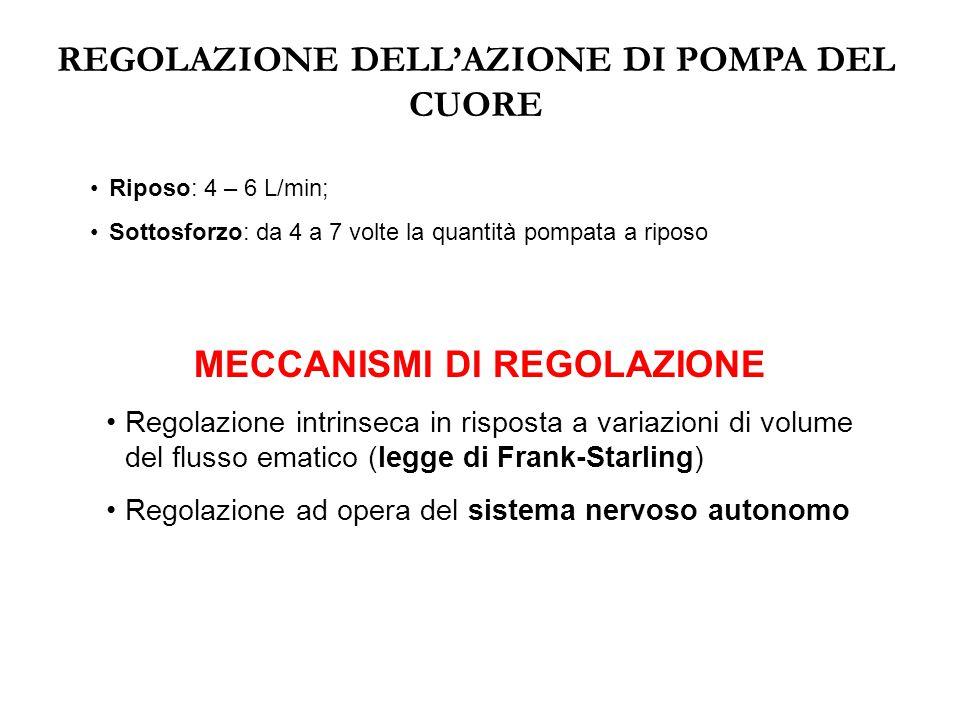 REGOLAZIONE DELL'AZIONE DI POMPA DEL CUORE MECCANISMI DI REGOLAZIONE