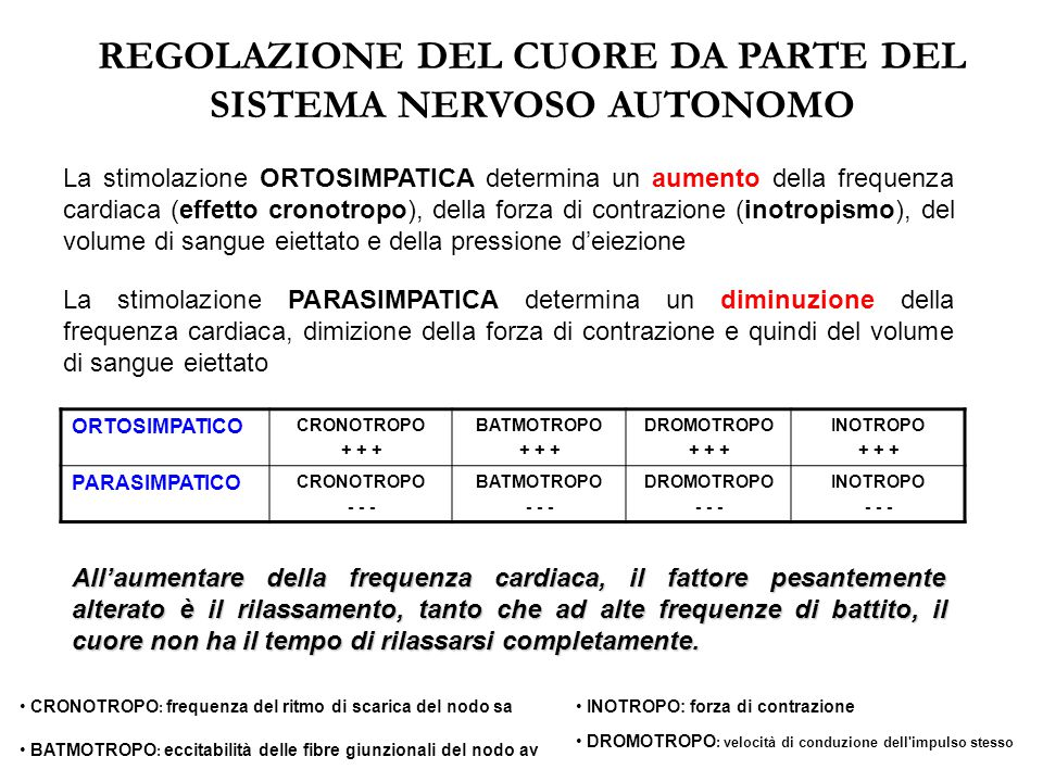 REGOLAZIONE DEL CUORE DA PARTE DEL SISTEMA NERVOSO AUTONOMO
