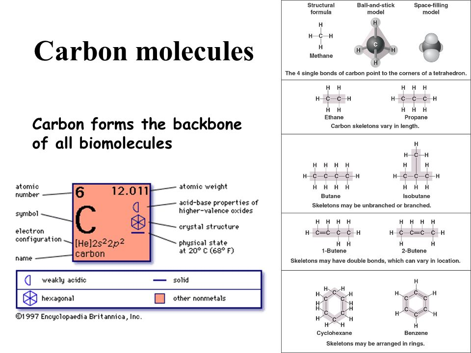 Carbon molecules Carbon forms the backbone of all biomolecules