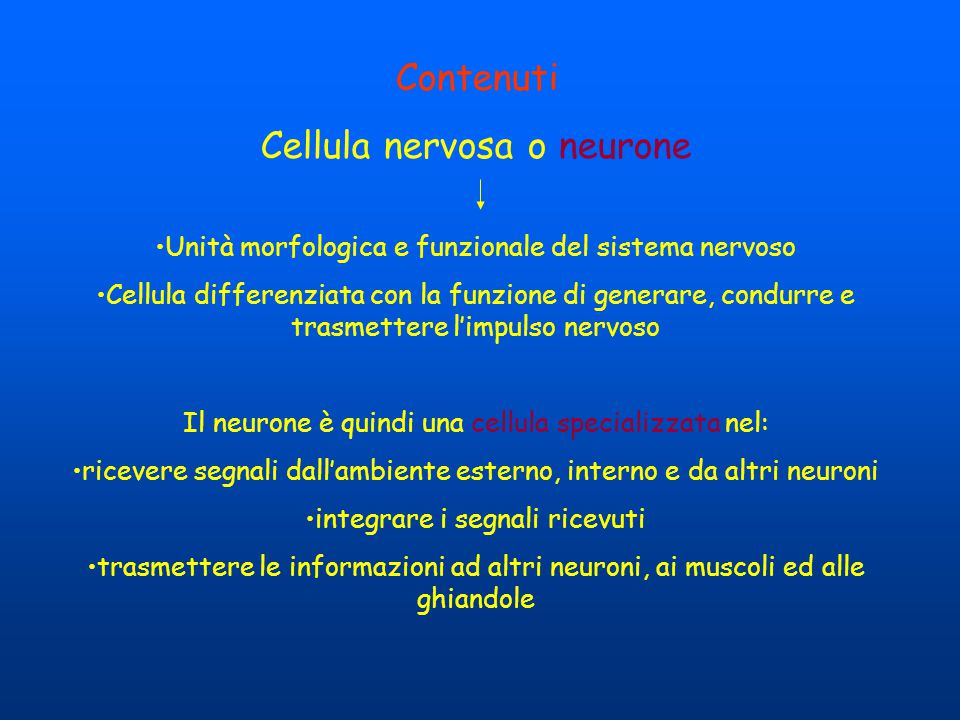 Cellula nervosa o neurone
