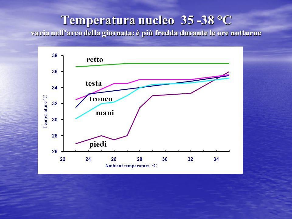 Temperatura nucleo 35 -38 °C varia nell'arco della giornata: è più fredda durante le ore notturne