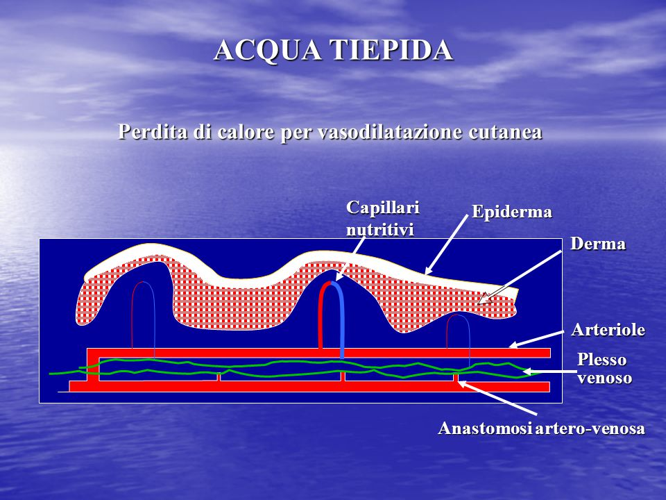 Perdita di calore per vasodilatazione cutanea