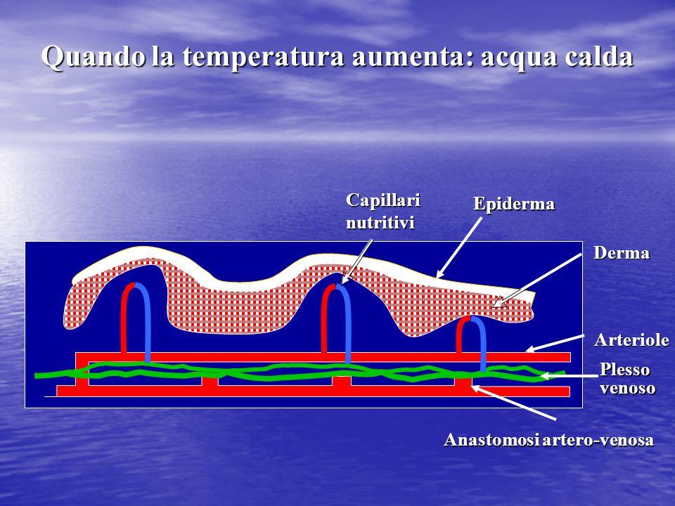 Quando la temperatura aumenta: acqua calda