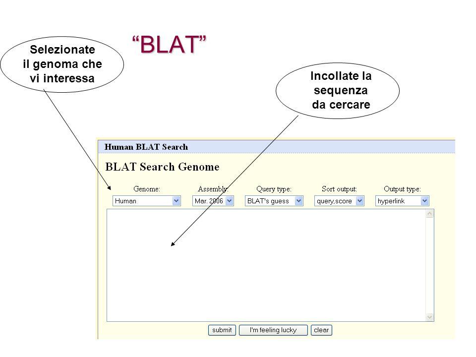 BLAT Selezionate il genoma che vi interessa Incollate la sequenza