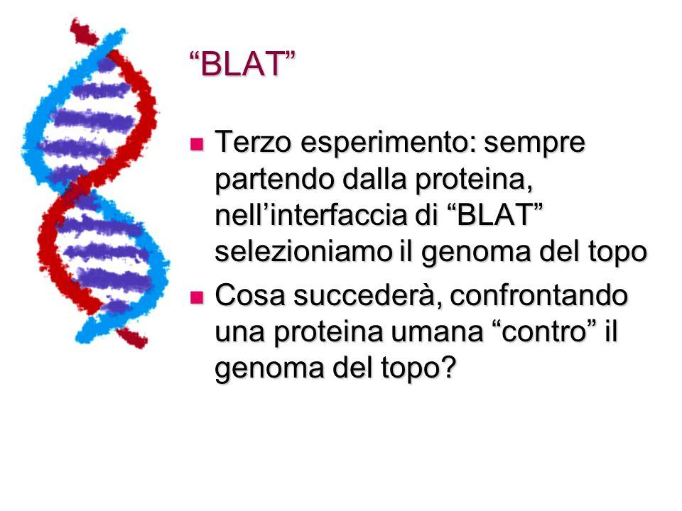 BLAT Terzo esperimento: sempre partendo dalla proteina, nell'interfaccia di BLAT selezioniamo il genoma del topo.