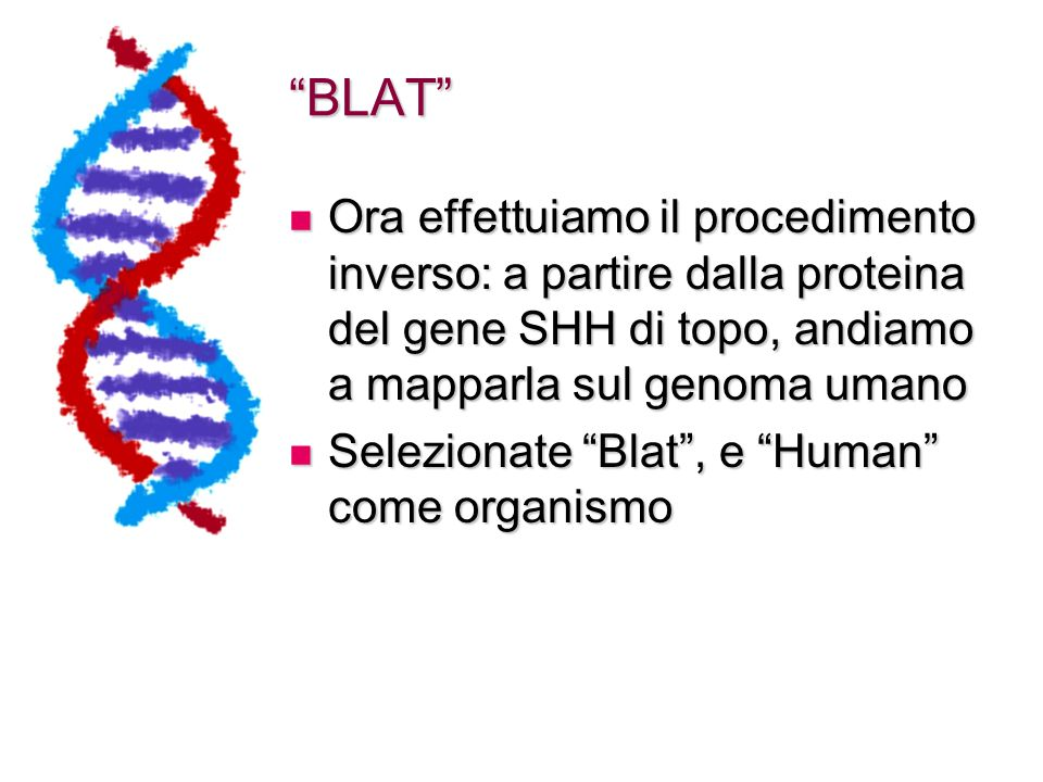 BLAT Ora effettuiamo il procedimento inverso: a partire dalla proteina del gene SHH di topo, andiamo a mapparla sul genoma umano.