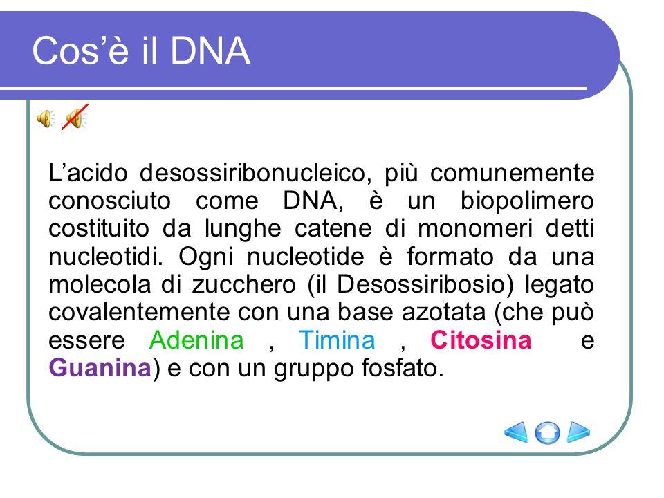 Cos'è il DNA