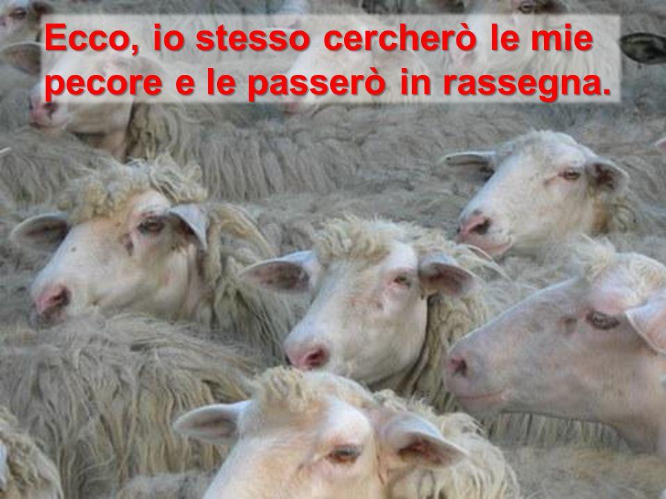Ecco, io stesso cercherò le mie pecore e le passerò in rassegna.