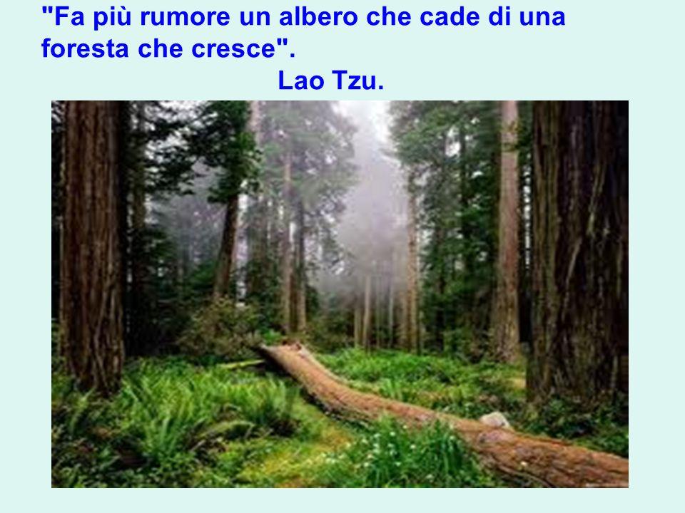 Fa più rumore un albero che cade di una foresta che cresce . Lao Tzu.