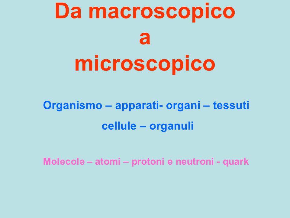 Da macroscopico a microscopico