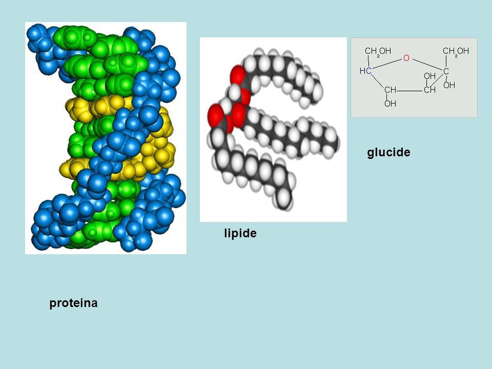 glucide lipide proteina