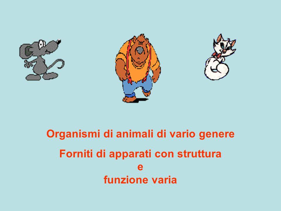 Organismi di animali di vario genere