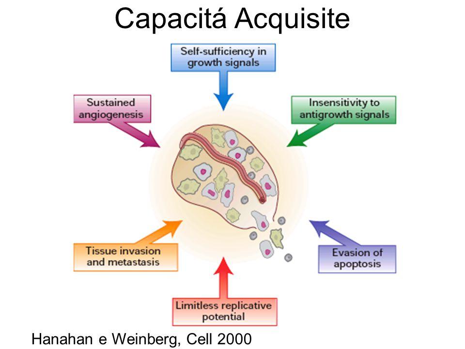 Capacitá Acquisite Hanahan e Weinberg, Cell 2000