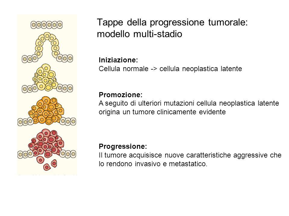 Tappe della progressione tumorale: modello multi-stadio